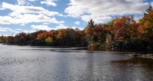 Sparrow Lake, Muskoka Cottage Lot -361